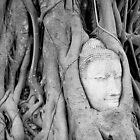 Buddha's Head in Bodhi Tree by Fern Blacker