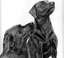 portrait of  labs, willson an william by leoniesutton