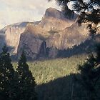 Yosemite Valley and Forest by Diana Sproul