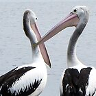 two pelicans by Anne Scantlebury