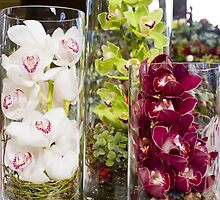 Trio of orchids by papillonphoto