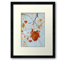 Crisp Autumn Framed Print
