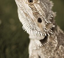 Bearded Dragon by Jennie Gardiner
