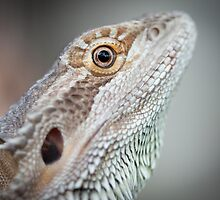 Portrait of a Dragon by ADAMAS
