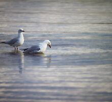 Two Seagulls by yolanda