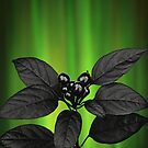 Black Berries and Northern Lights by Michael Taggart