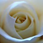White Rose Flower by David Alexander Elder