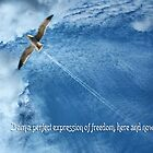 Jonathan Livingston Seagull by Maria  Gonzalez
