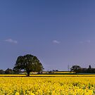 Yellow fields under spreading oak by mattcattell