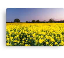 Movement in the rapeseed fields Canvas Print