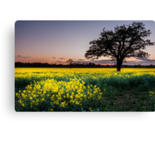 Glowing fields at Dusk Canvas Print
