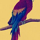 Macaw by Hannah Marechal