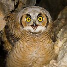 Whooo You Lookin At? by Kent Keller