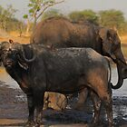 Action! by Explorations Africa Dan MacKenzie