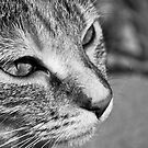 Cat in Black and White by Glen  Robinson