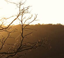 Mornings Web by Colin Binks