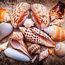 Seashells of Sanibel Island by Bonnie T.  Barry