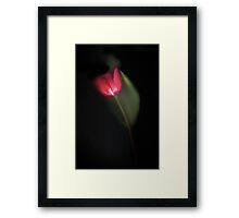 A Spring Favourite - image 1 Framed Print