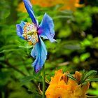 Blue Poppy Fashionista by Lynnette Peizer