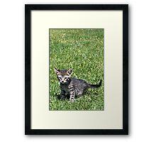 Ratchet the Kitten Framed Print