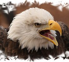 Bald Eagle framed. by Gregg Williams