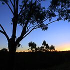 Aussie Bush Sunset by Dannel Sargent