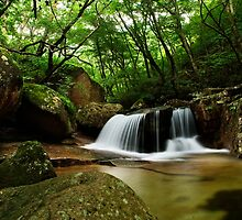 Forest Waterfall - Songnisan, South Korea by Alex Zuccarelli