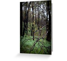 Stringy Bark Forest, Norton Summit Greeting Card