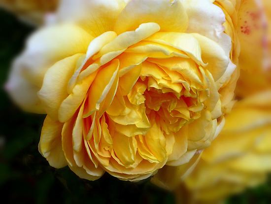 Soft and Beautiful by waxyfrog