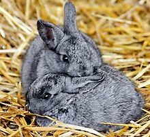 Snuggle Bunnies by AnnDixon