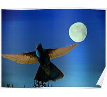 Hummingbird Moon II Poster