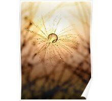 Dandelion Sunrise Poster