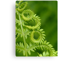 Fern Leaf Detail Canvas Print