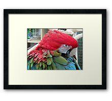 32 - PARROT - DAVE EDWARDS - 2012 Framed Print