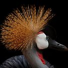 Crested Crane by Craig Higson-Smith