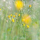 Photo of yellow flowers by crazylemur