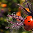 AFTER THE RAIN TODAY by Betsy  Seeton