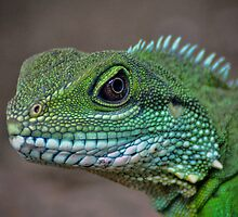Chinese water dragon by venny