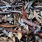 Leaf litter by Kell Rowe