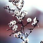 White by WDaRos714