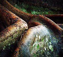 Moreton Bay Fig Detail by Paul Todd