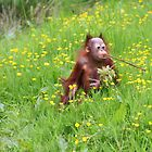 Orang Baby with long Teeth! by Jo Nijenhuis