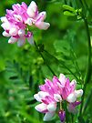 Crown Vetch Duo by Ron Russell