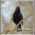 Blackbird by PHILI