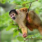 Curious Squirrel Monkey by Jo Nijenhuis
