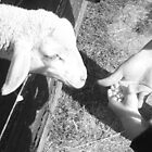 Lamb by LacerdaZoom