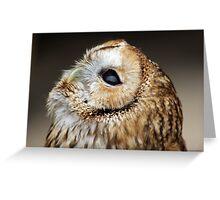 Tawny owl gazing skywards Greeting Card