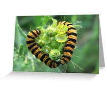 Caterpillar love Greeting Card