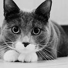 Cats by Anne Staub by Anne Staub