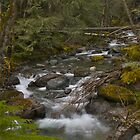 Comox Lake Creek, Vancouver Islansd, Canada by Michael Hyndman